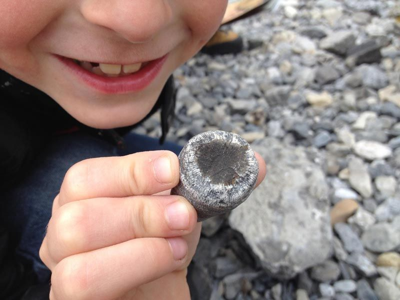 Rugose Coral - catch and release fossil hunting is always a hit!